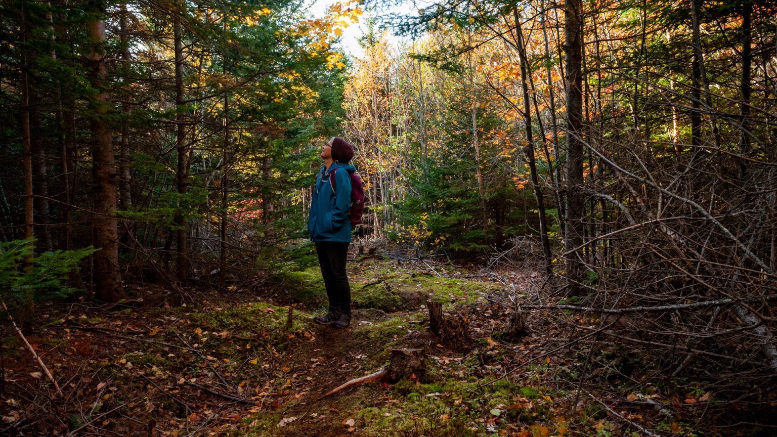 Forest Bathing at Treetop Haven
